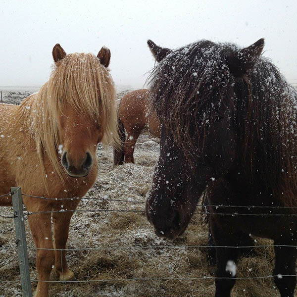 How to Wash a Horse in Winter