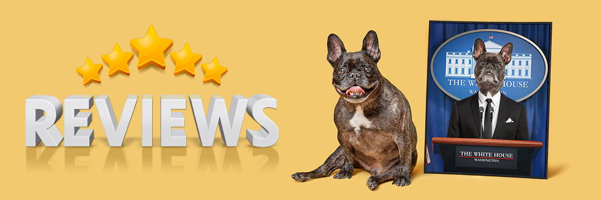 pet icon renaissance dog art review banner