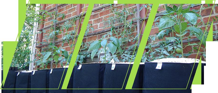 Ecogardener Grow Bags in the garden