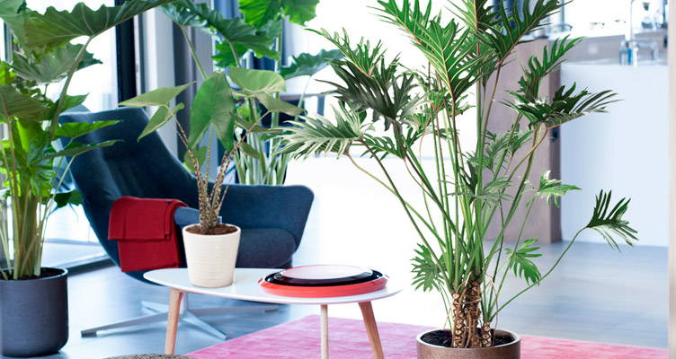 Top 5 des grandes plantes d'intérieur