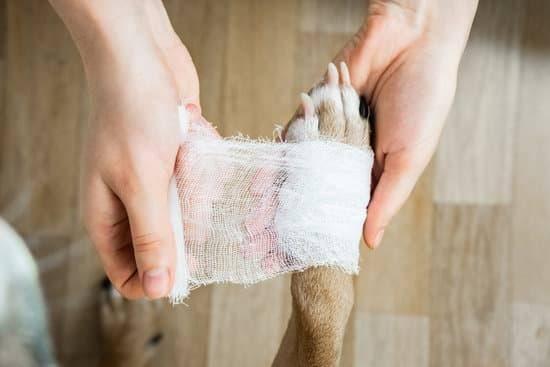A dog gets its paw bandaged up