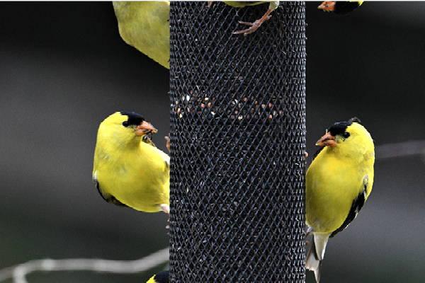Choosing the Right Bird Feeder