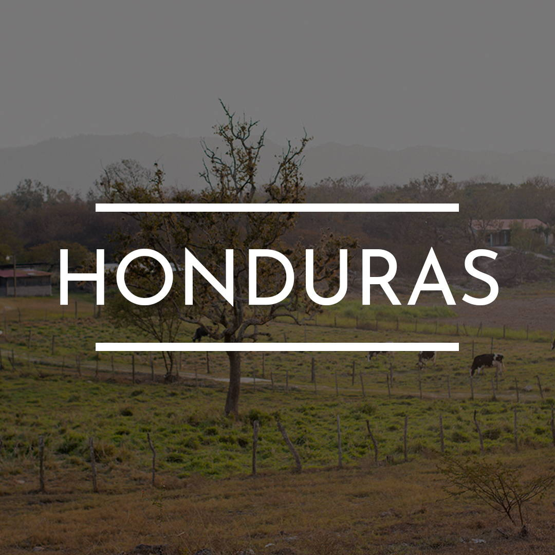 """HONDURAS"" is written on top of an image of Several cows graze in a fenced in field"