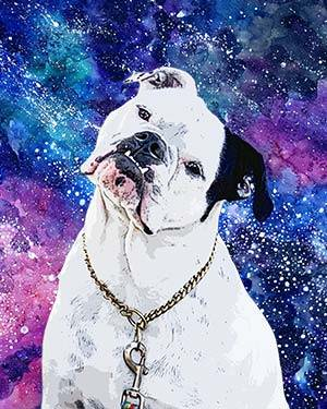 boxer on spacer background