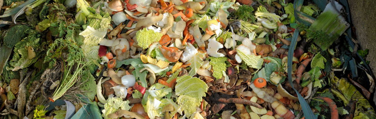 Vegetable food waste