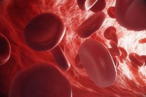 Eisenhaltige vegane Lebensmittel sind wichtig für die Bildung von roten Blutkörperchen