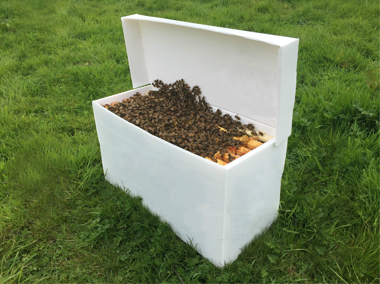 Nucleus Beehive