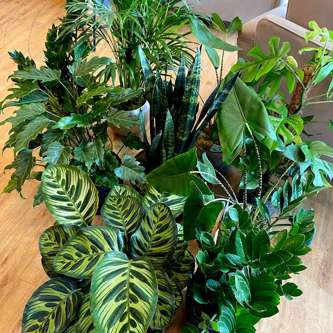 Home Accessories House Plants