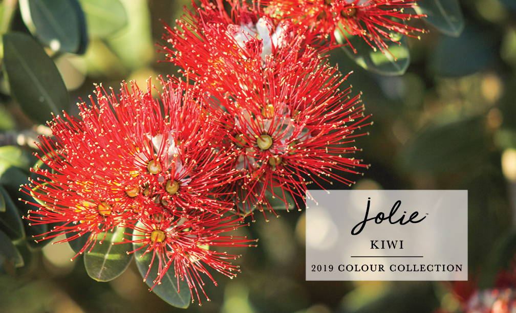 Kiwi New Zealand Colour Mix Collection Jolie Paint