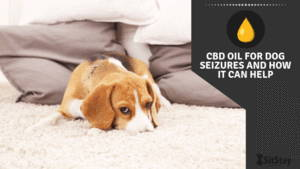 CBD oil for dog seizures and how it can help