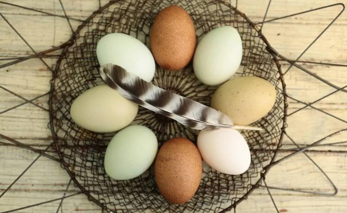Delicious Egg Scramble Snack Recipe