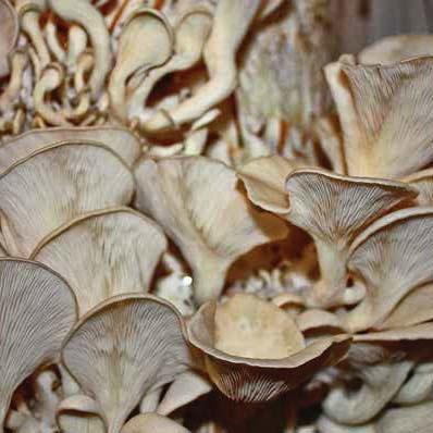 Mycelial Mayhem Profit and Companion Planting Growing Mushrooms for Fun
