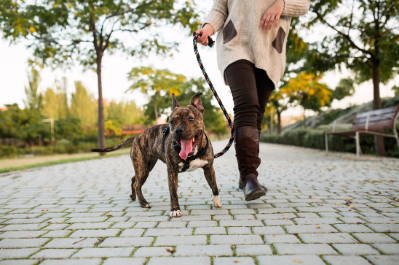 5 Ways You Can Make Your Dog Walks The Best They Can Be - Team K9