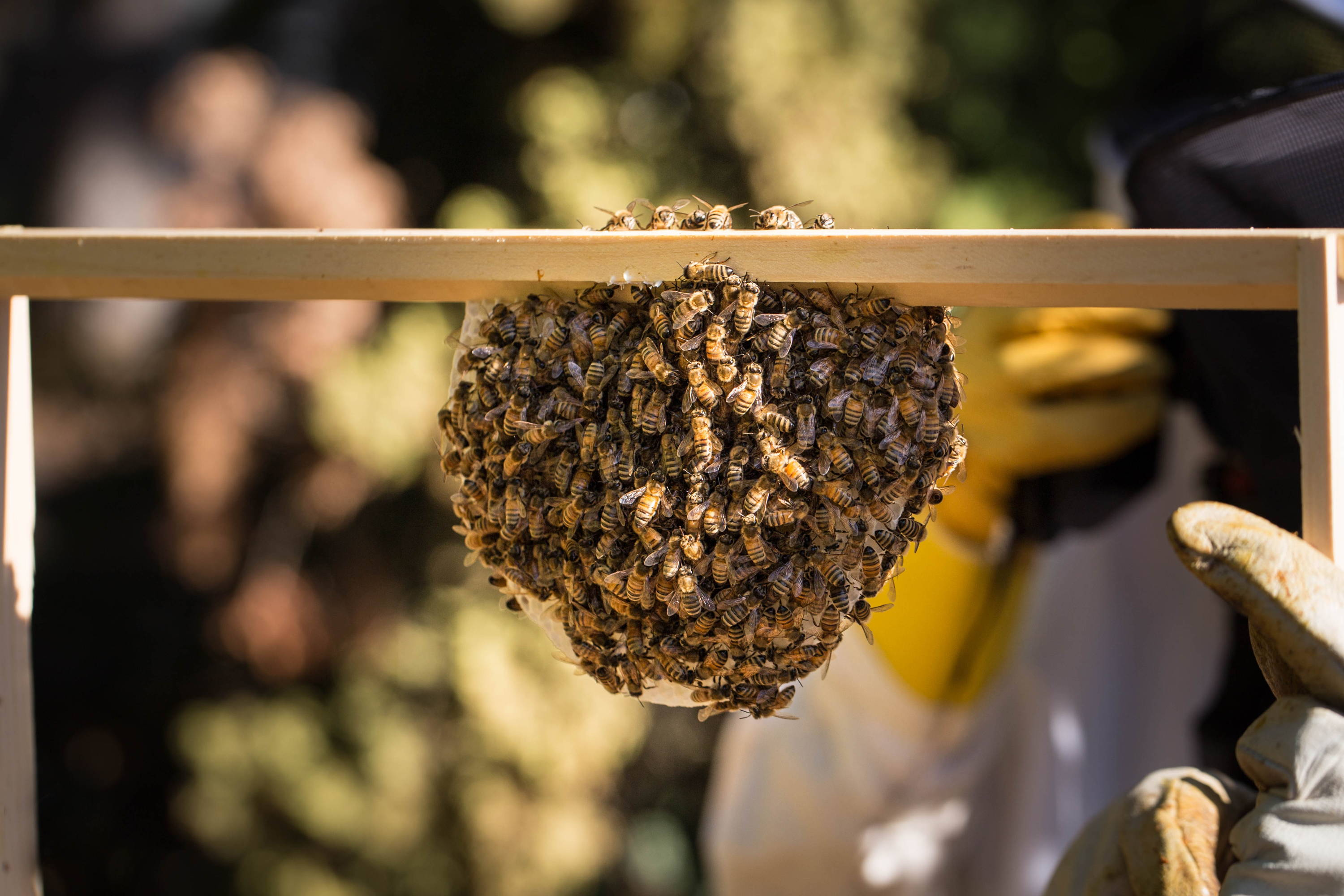 Buying Your First Langstroth Hive - Bee Built