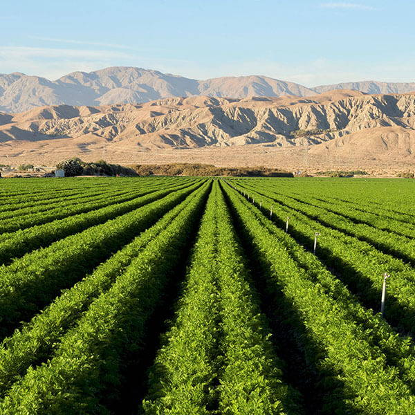 High Quality Organics Express Desert Agriculture in Southern California