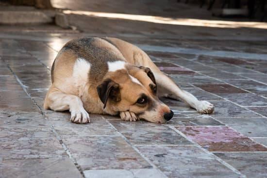 A tan dog lies on a tiled floor looking sad