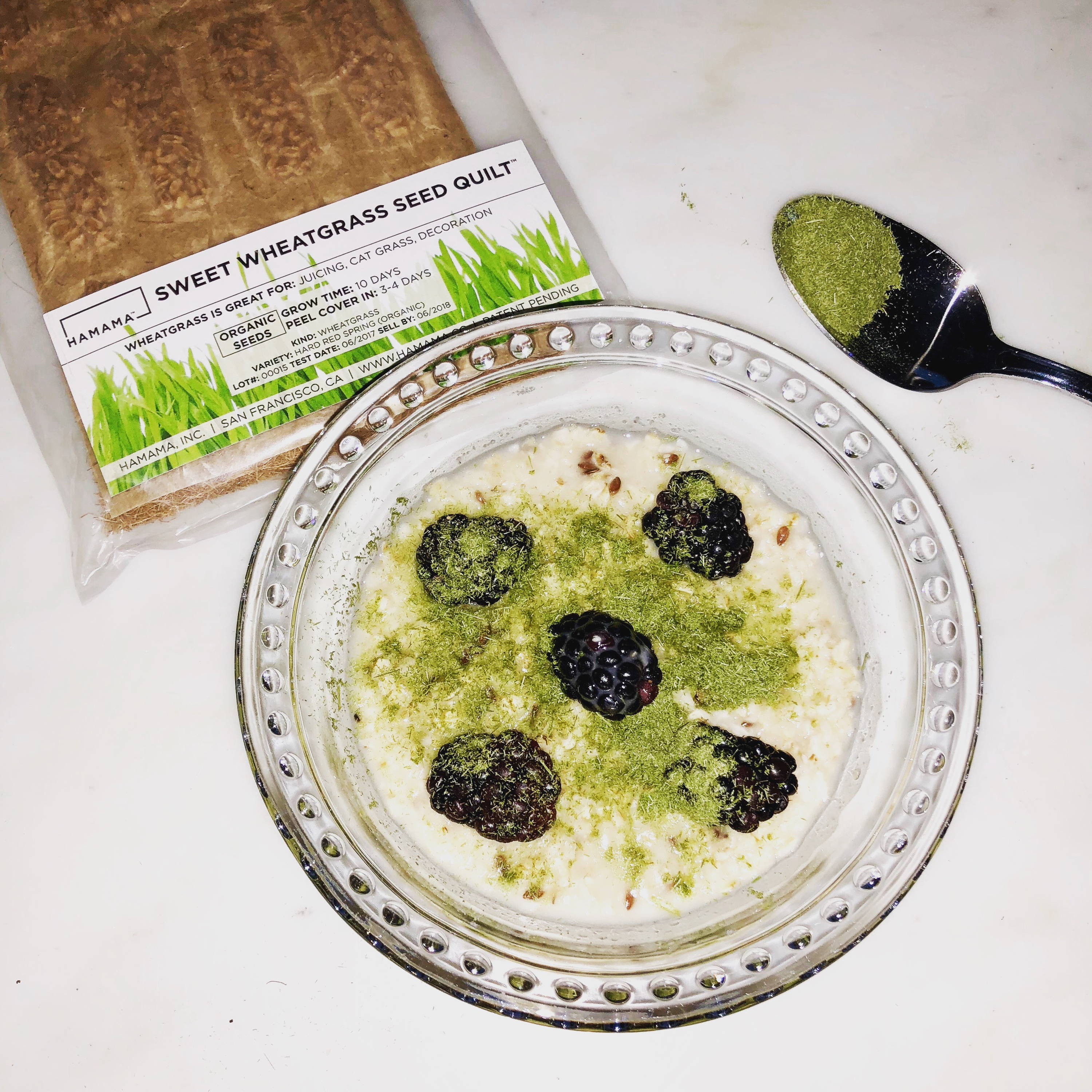 Wheatgrass powder mixed into overnight oats with blackberries.  The wheatgrass Seed Quilt is in the background.