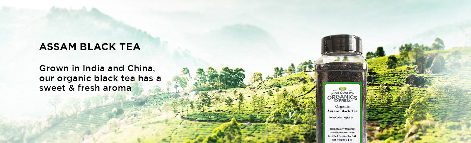 High Quality Organics Express tea field in the background with a jar of tea