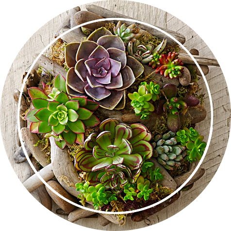 A beautiful collection of succulent plants
