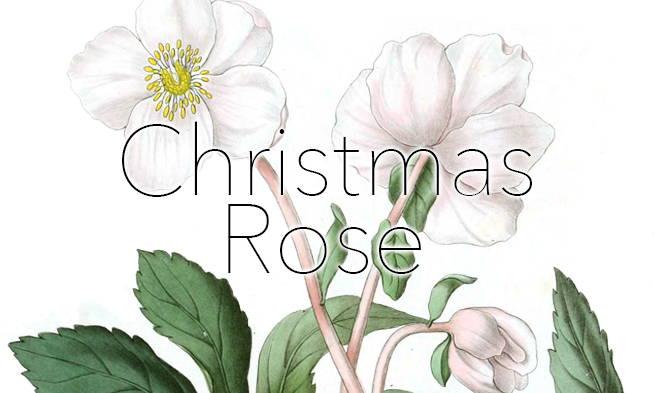 Artificial Rose Plants