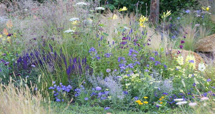 Bordura di fiori di campo