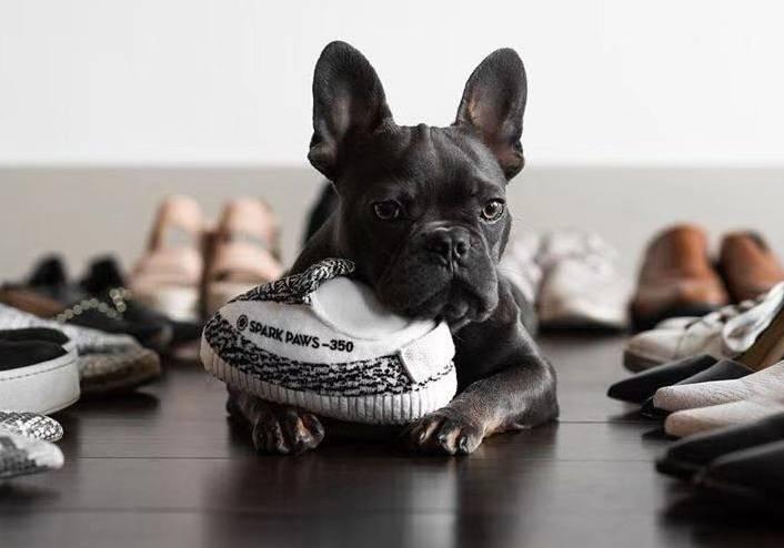 dog plush toy shoe yeezy sneaker