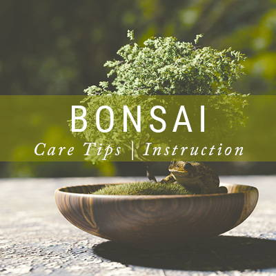 Bonsai Care Tips | Instruction