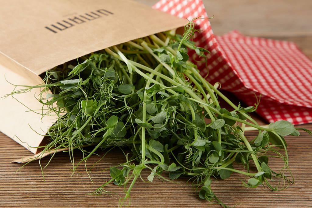 Erbsen Microgreens reich an Proteinen.
