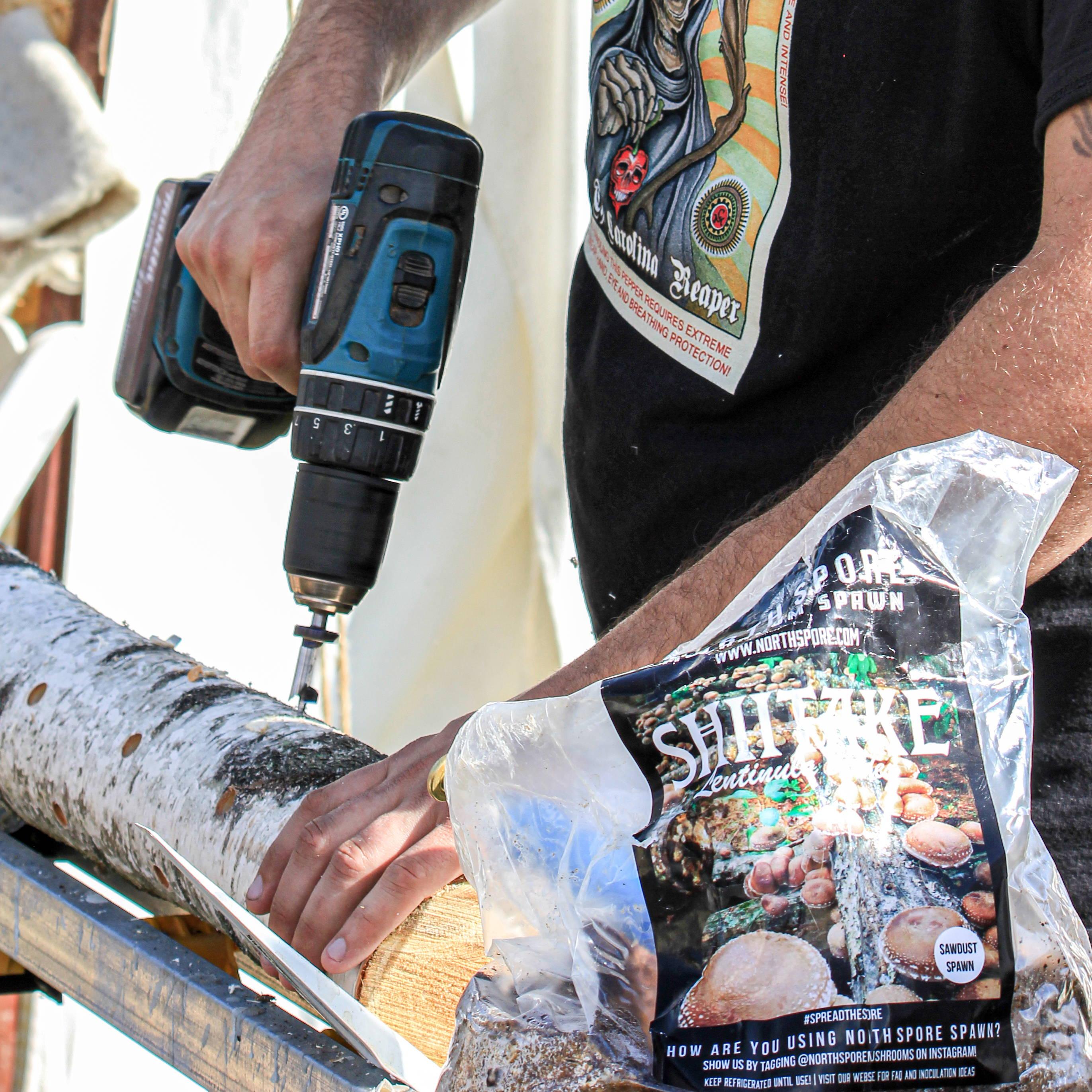 Drilling a log for Shiitake inoculation