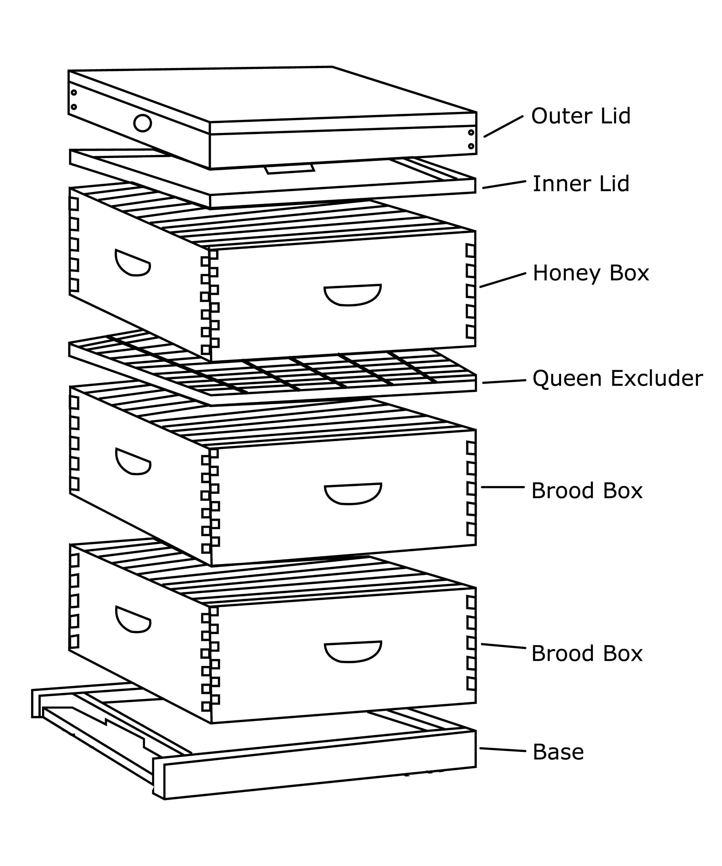 Standard Langstroth Beehive