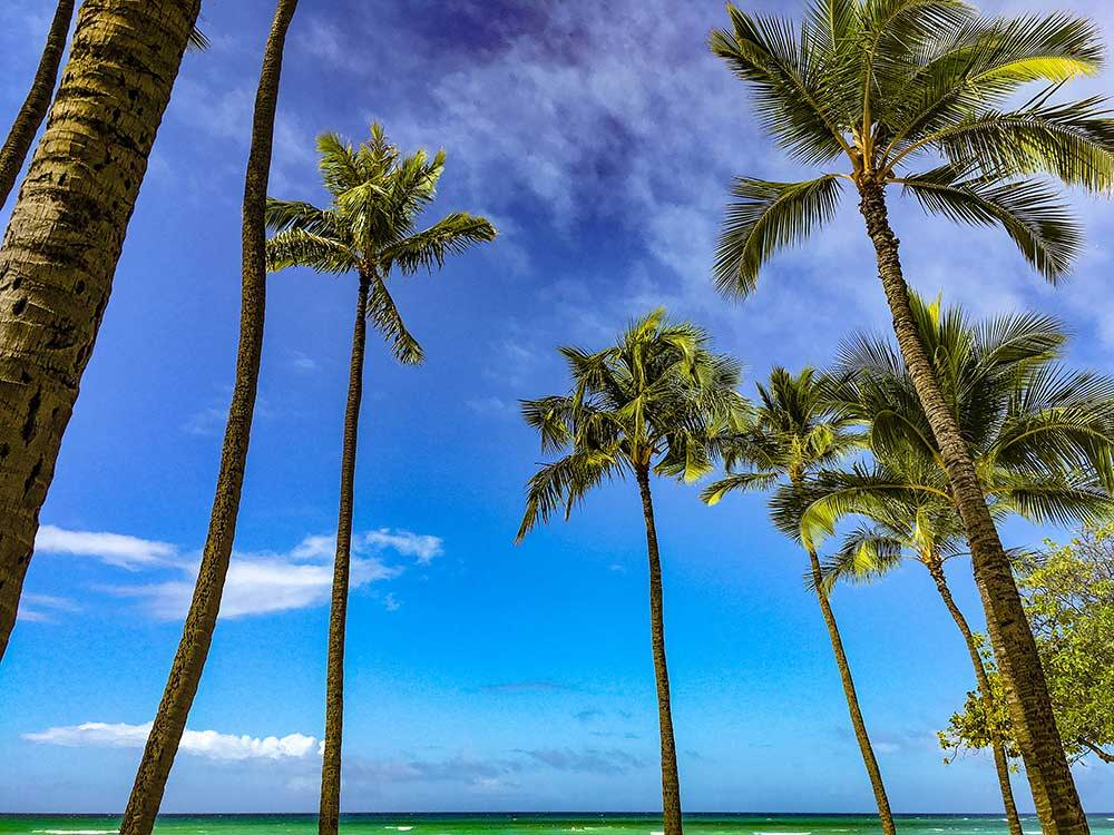 Palm trees on the tropical island of Hawaii, the birth place of paddleboarding