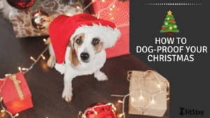 how to dog proof your christmas