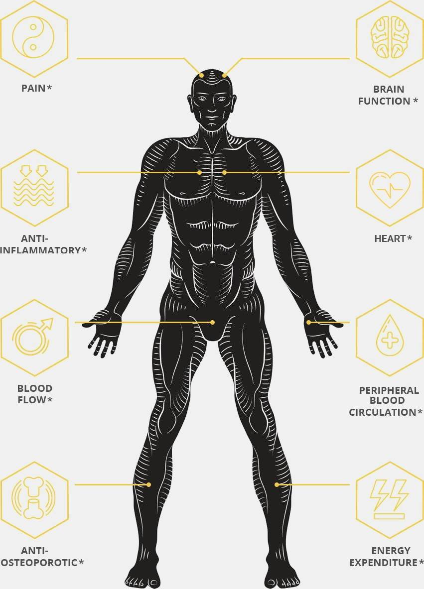Illustration of Benefits of Anabolic Health Black Ginger to Mens Body