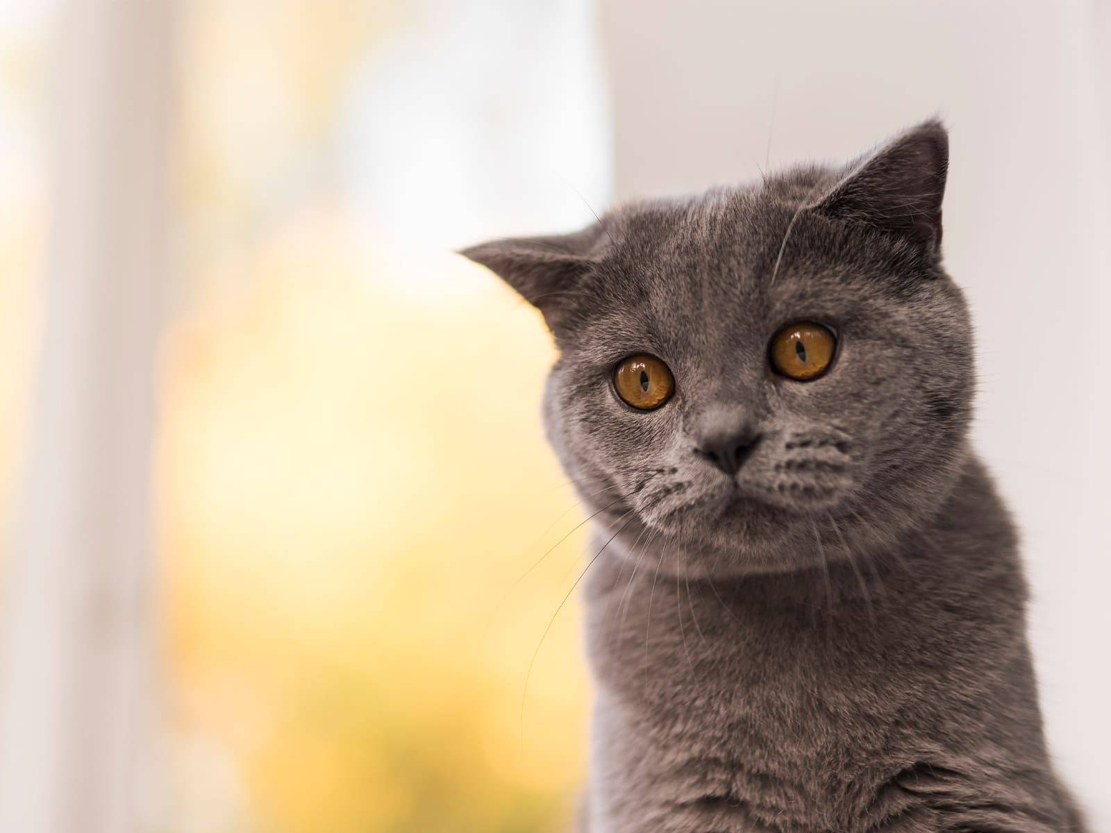 Katze alleine lassen - Katze ist einsam