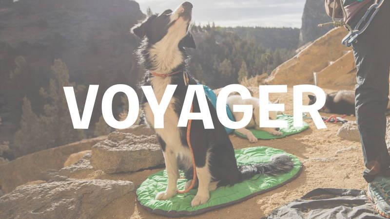 inooko-voyager-avec-son-chien