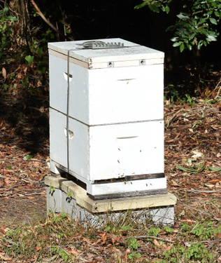 Full Beehive
