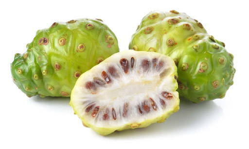 Noni (Morinda citrifolia) is a year-round blooming bush which bears small, oval fruit