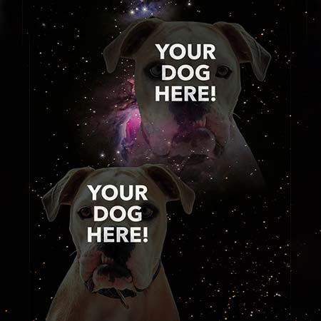 Super Portrait of pitbull on galaxy sky