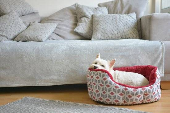 A small white dog lays in a dog bed in front of a grey couch