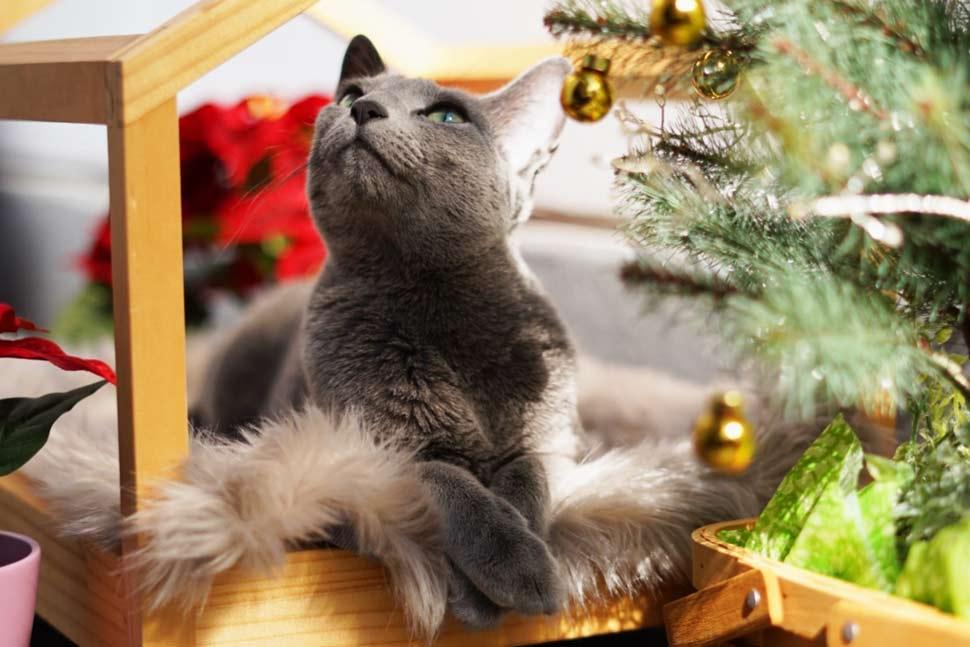 スケルトンハウスとクリスマスデコレーション