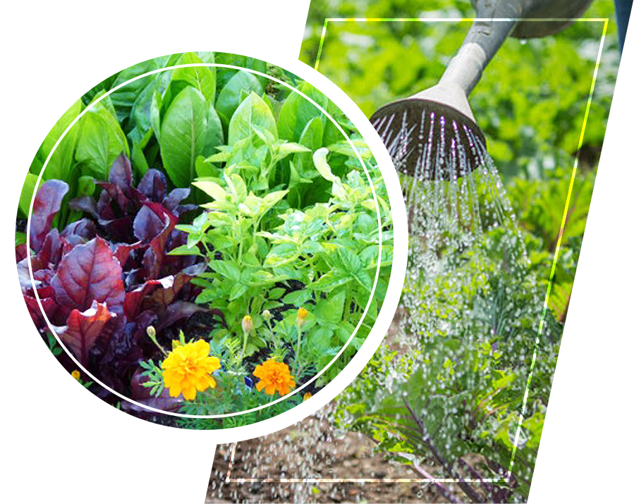 Companion planting and watering plants