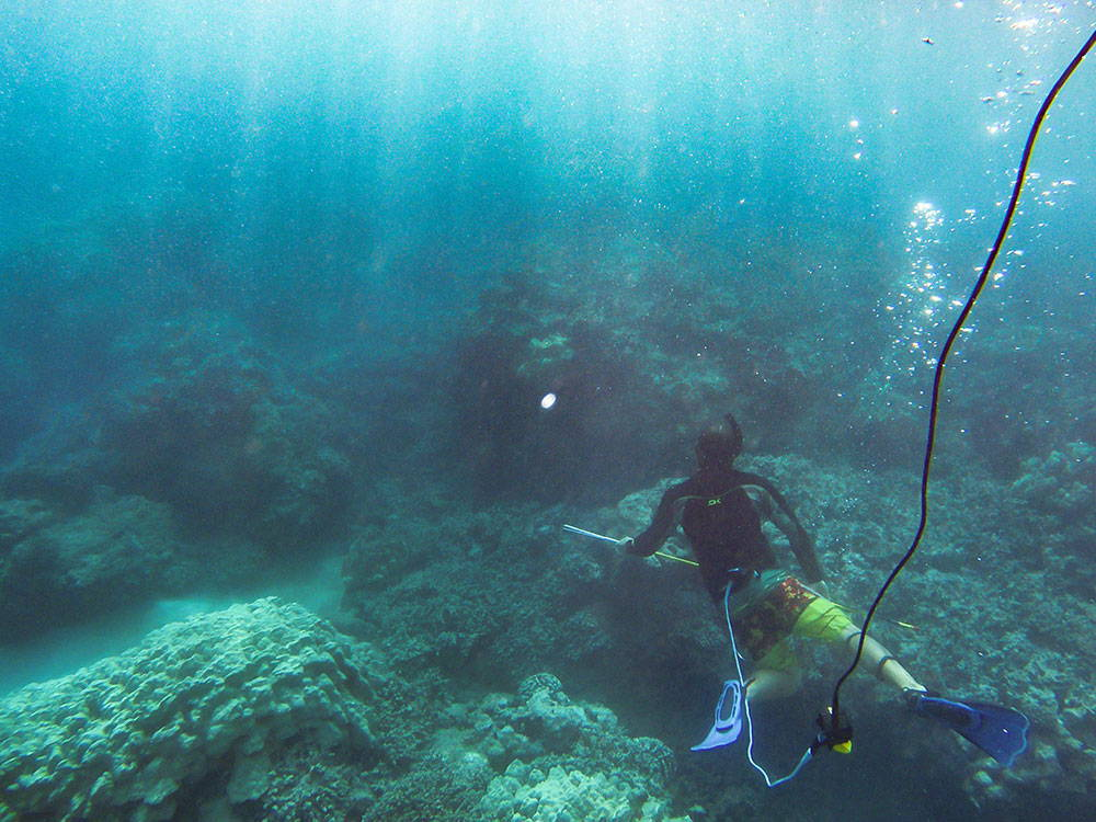 Spear fishing over coral