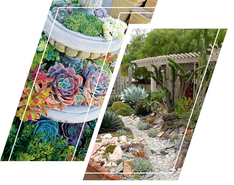 Succulent garden for small and cramped garden