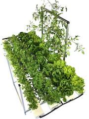 52 Plant with Trellis