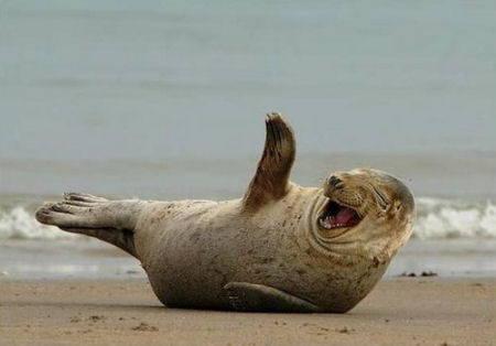 50 Funny STUPID Jokes Guaranteed To Make Your Mates Laugh - Yellow ...