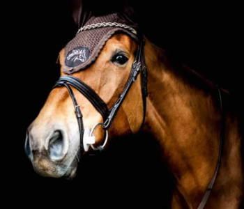 Beris Bits from CE-Equestrian