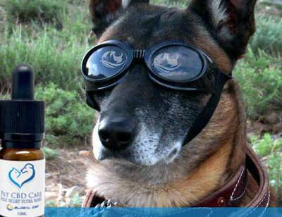Global CBD Pet CBD Care In Front Of German Shepherd Dog With Goggles On Ready For Adventure