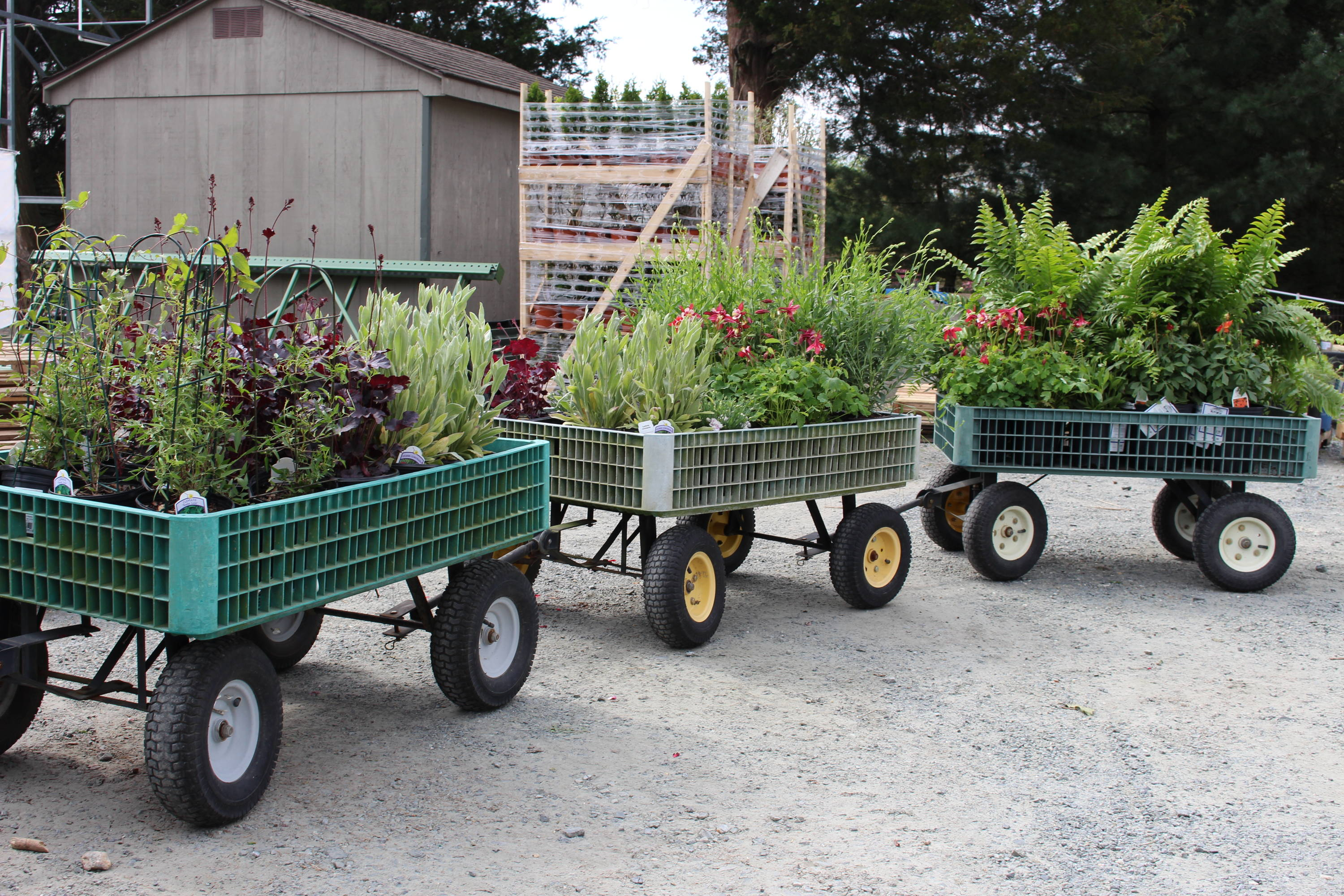 Hand wagons filled with plants.