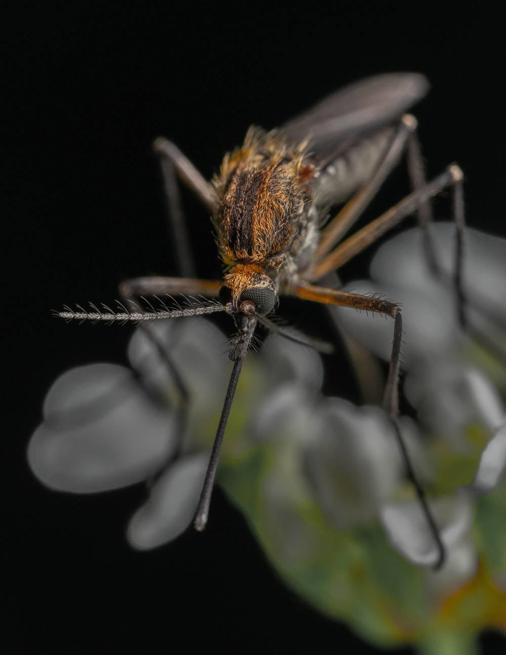 pourquoi les piqures de moustiques demangent