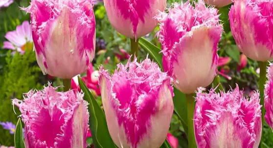 Top 5 meest excentrieke bloembollen